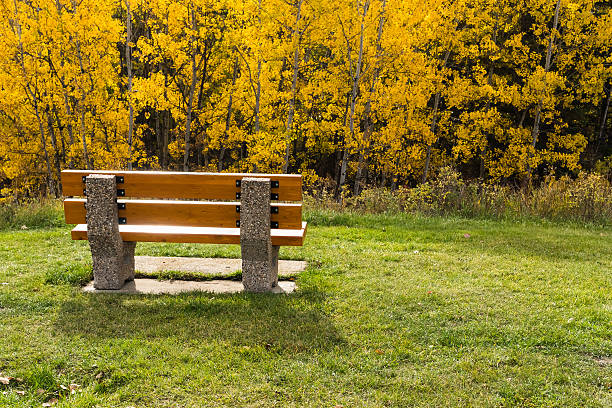 Wooden bench on concrete base in sunlight stock photo