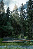 istock wooden bench seats in forest with sunlight 1297596391