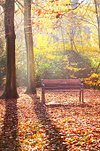 A wooden bench under the red, orange and yellow beech trees in the Nachtegalen park. Sunlight glowing through the tree trunks, shadows on the ground. Forest floor of colorful leaves. Antwerp, Belgium