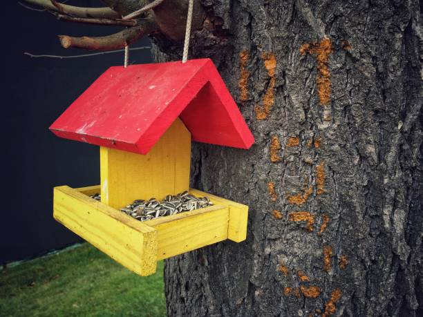 Wooden bird feeder with a red roof hung on a tree stock photo