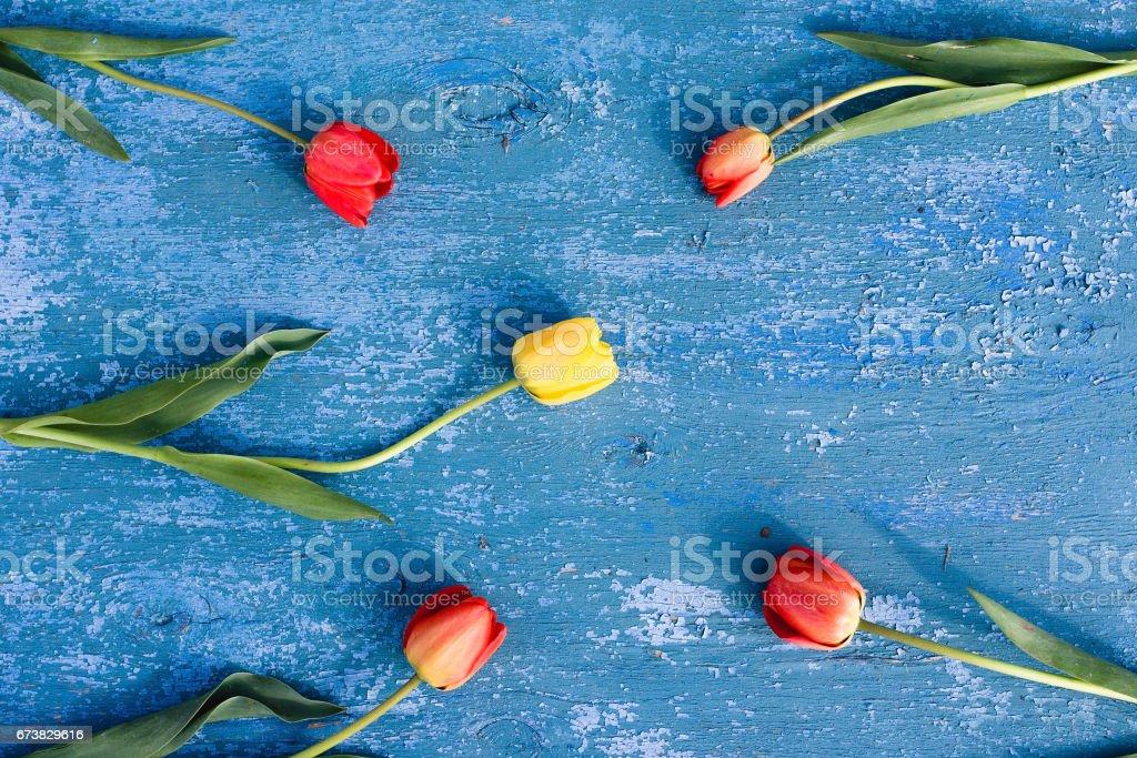 Fond bleu en bois et tulipes rouges photo libre de droits