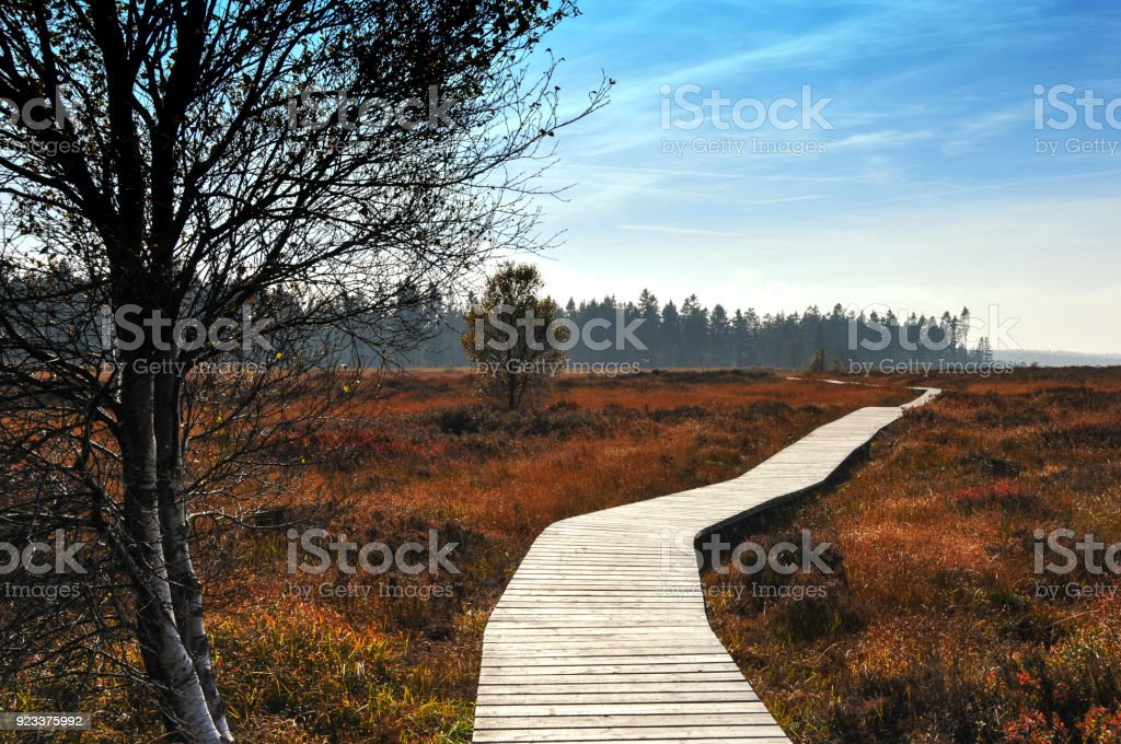 Wooden boardwalk in the National Park Hautes Fagnes, Belgium stock photo