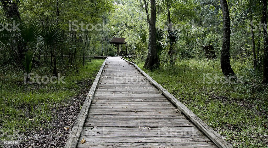 Wooden boardwalk over marsh leading into woods royalty-free stock photo