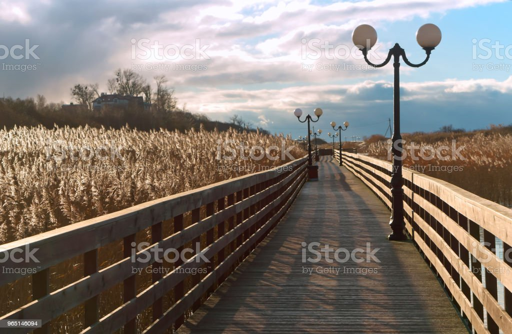 wooden boardwalk through the reeds in the sunlight, a wooden plank promenade with lampposts royalty-free stock photo