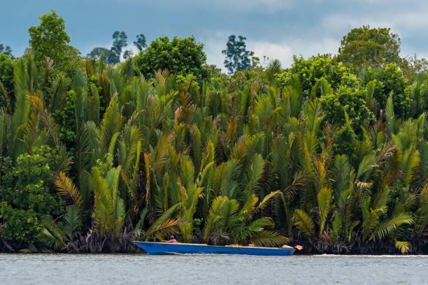 Wooden boat cruising Berau river, Borneo, Kalimantnan, Indonesia stock photo