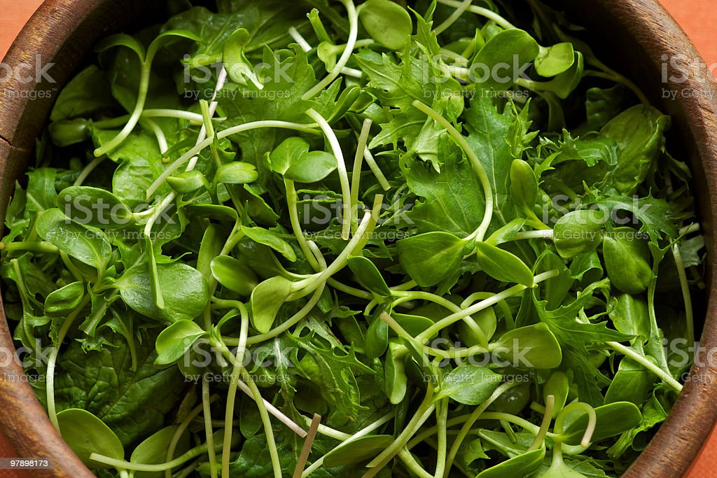 Wooden Bowl of Freshly Picked Salad Greens royalty-free stock photo