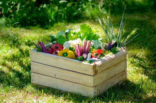 Wooden box of fresh vegetables on green grass. Harvest concept.
