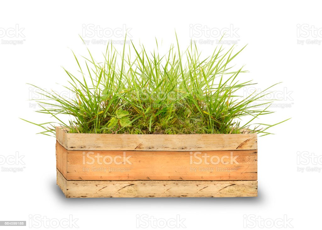 wooden box with green grass stock photo