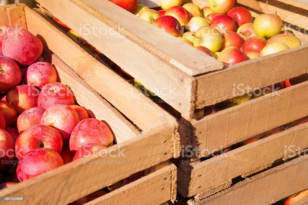 Wooden boxes with ripe red apples stock photo