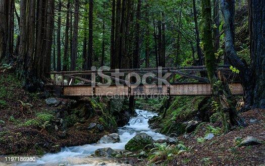 Wooden Bridge Crosses Creek in Redwoods Forest in northern California