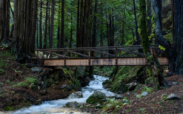 Wooden Bridge Crosses Creek in Redwoods Forest stock photo