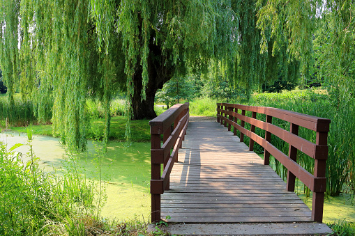 wooden bridge going over a pond