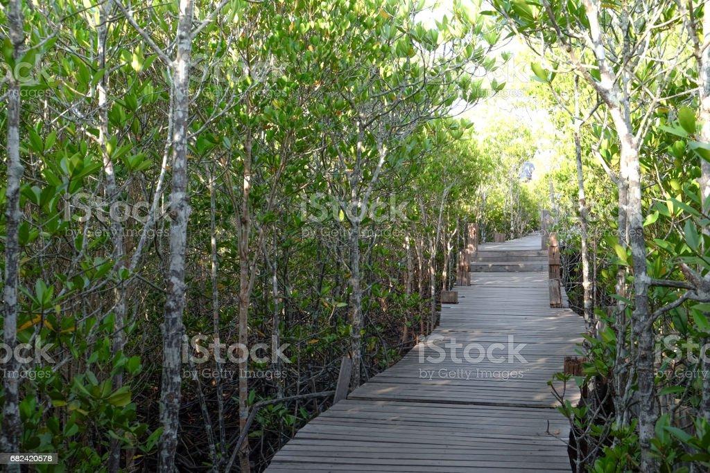 Pont en bois champ doré de Mangrove photo libre de droits