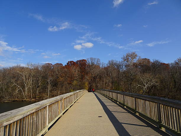 wooden bridge in the fall stock photo