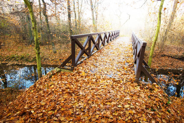 Wooden bridge in the forest in the autumn taken by RAW footbridge stock pictures, royalty-free photos & images