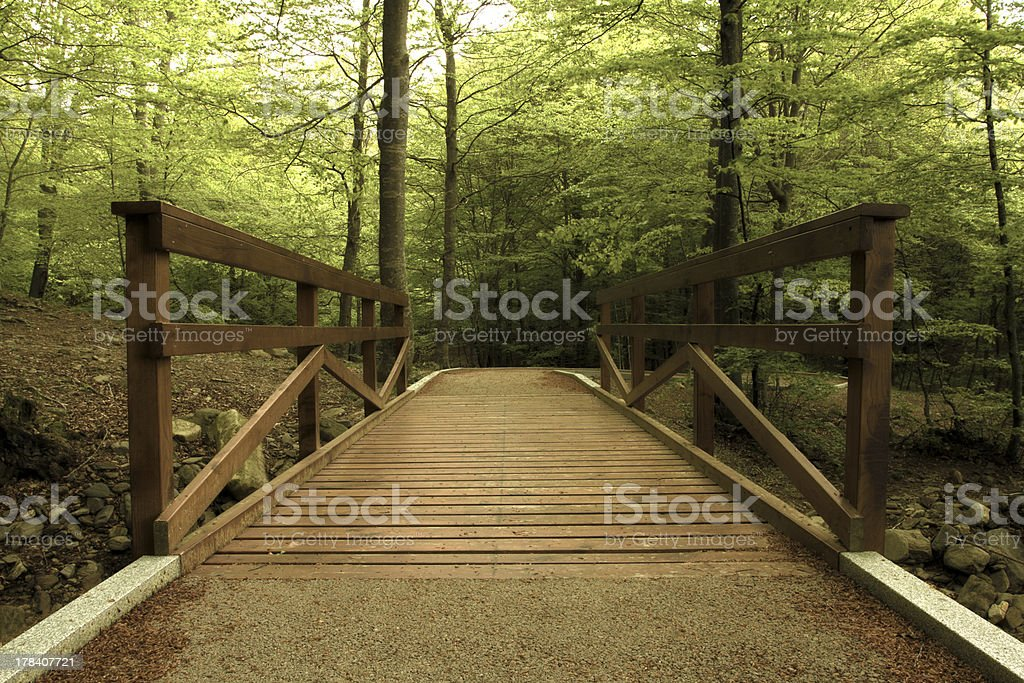 Wooden bridge in the green forest stock photo