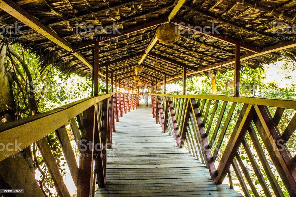 Wooden bridge in tropical forest stock photo