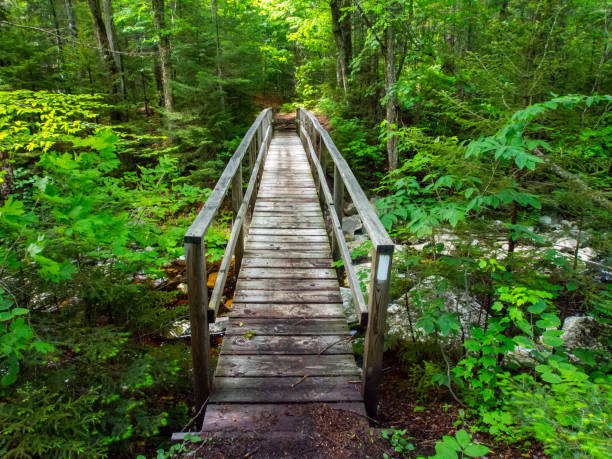 Wooden Bridge on Appalachian Trail in Green Mountains Vermont A wooden bridge on the Appalachian Trail in the Green Mountains of Vermont. appalachian trail stock pictures, royalty-free photos & images