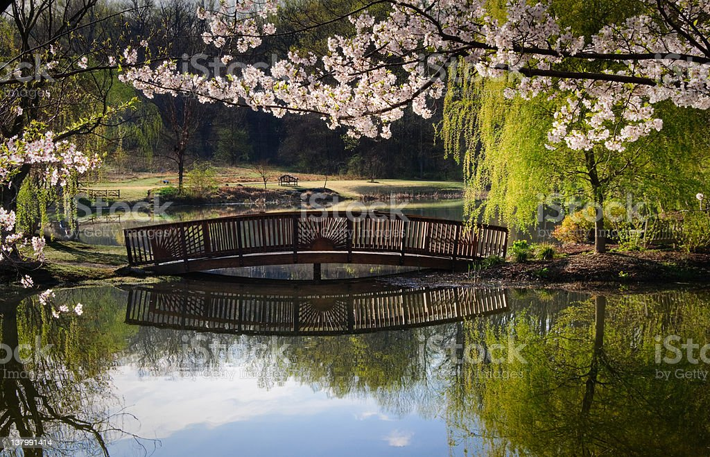 Wooden bridge over a tranquil pond in spring royalty-free stock photo