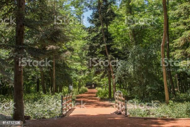 Photo of Wooden bridge over pathway