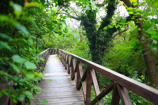wooden bridge road in a rainforest landscape