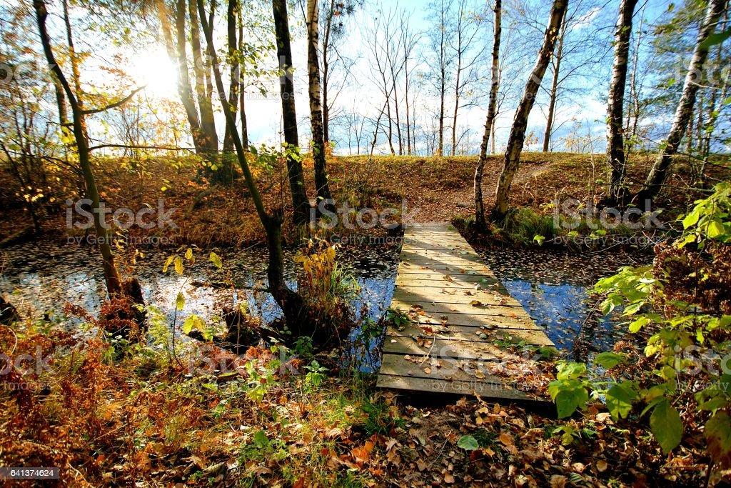 Wooden bridge through a small river in the forest Стоковые фото Стоковая фотография