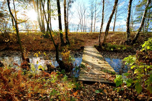 Cтоковое фото Wooden bridge through a small river in the forest