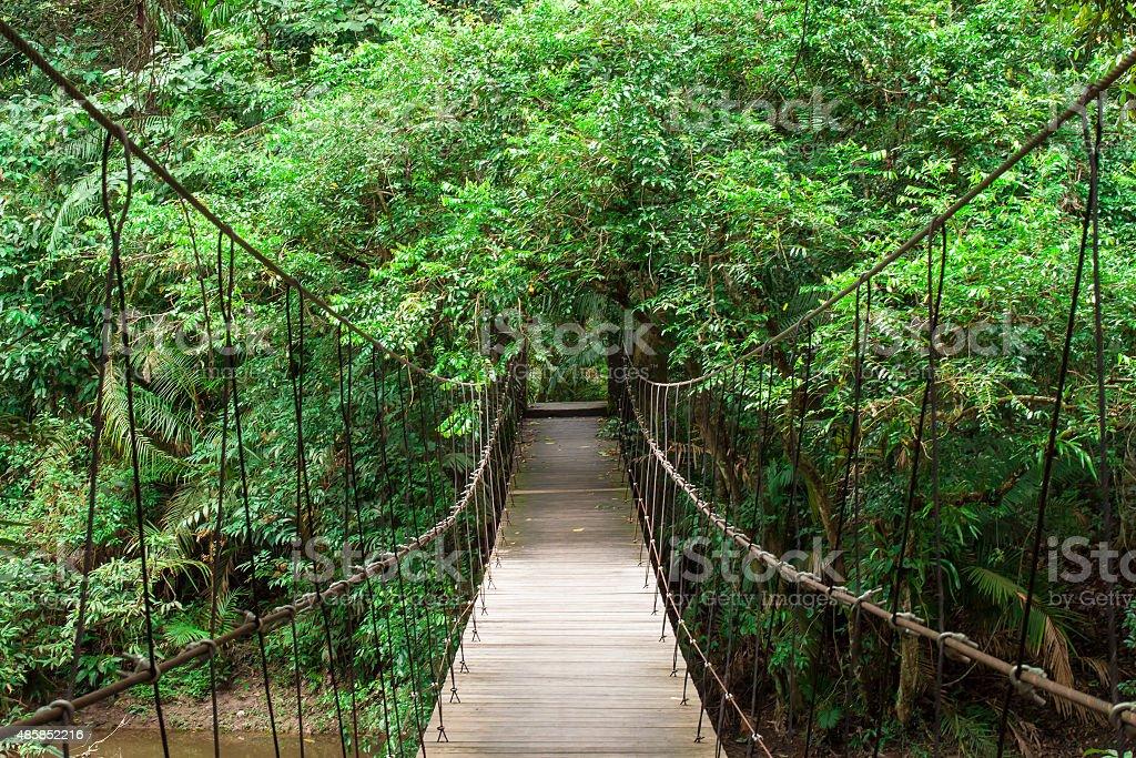 Wooden bridge to the jungle stock photo