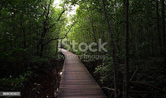 wooden bridge walkway in dark mangrove forest