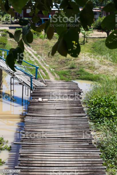 Photo of Wooden bridge with large leaves.