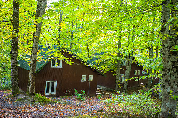 wooden cabins at yedigoller national park in mengen bolu turkey - 볼루 뉴스 사진 이미지