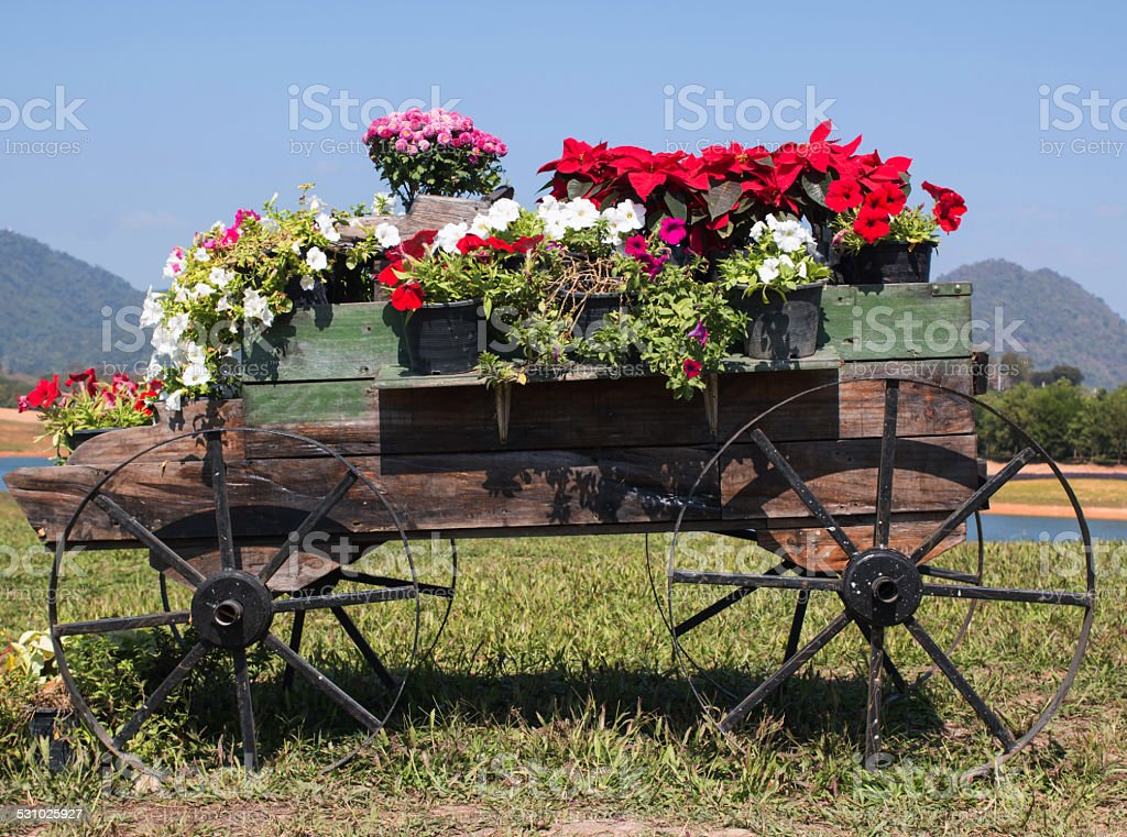 wooden cart full of colorful flowers stock photo