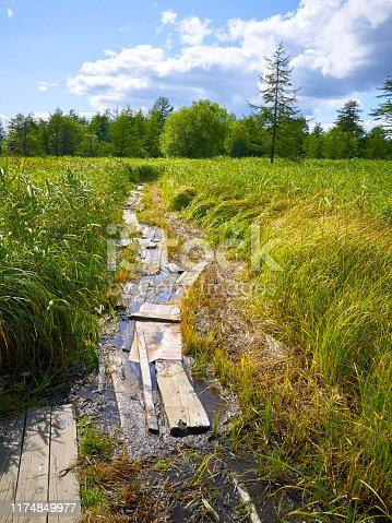 Wooden causeway on bog