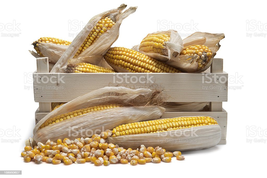 Wooden crate with corn ears royalty-free stock photo