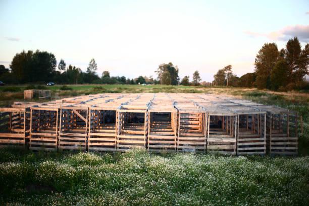 Holzkisten in Feld – Foto