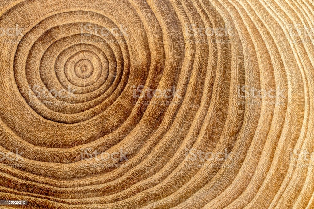 Wooden cross section detail. Wood background. Wooden cross section detail. Wood background. Aging Process Stock Photo