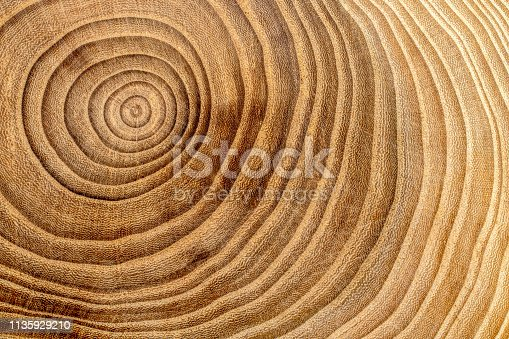 Wooden cross section detail. Wood background.