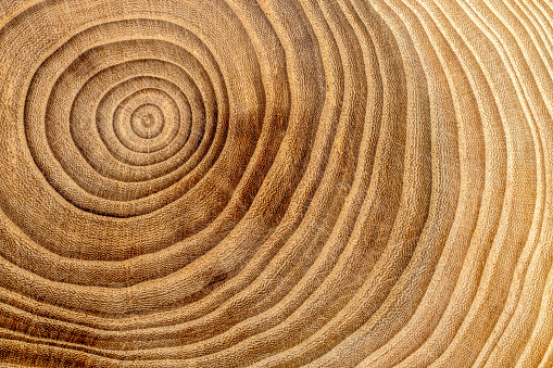 Wooden Cross Section Detail Wood Background Stock Photo - Download Image Now