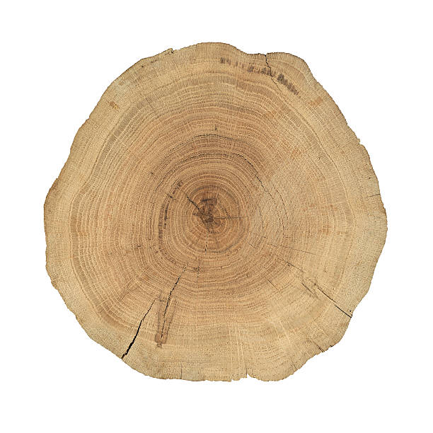 Wooden cross section Crossection of an oak tree trunk.  log stock pictures, royalty-free photos & images