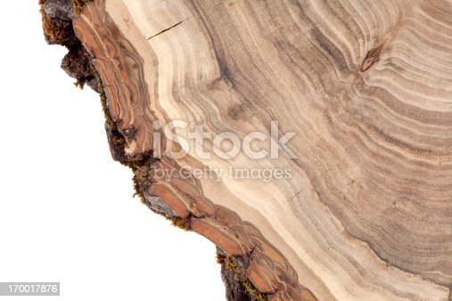 Wooden cut texture. Cross section of walnut tree trunk isolated on white. Nature abstract background.