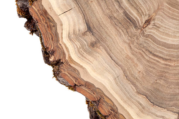 Wooden cross section picture id170017876?b=1&k=6&m=170017876&s=612x612&w=0&h=ixoznfz5if zslvvv barnabezko9 sgetlbw6scxsm=