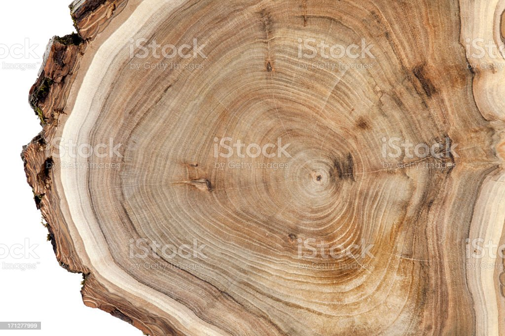 Wooden cross section stock photo