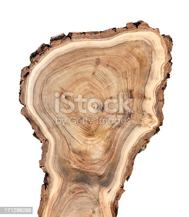 Cross section of walnut tree trunk.