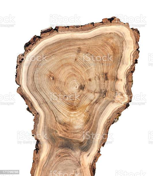 Photo of Wooden cross section