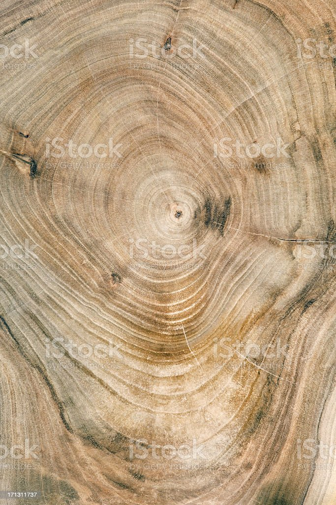 Wooden cross section royalty-free stock photo