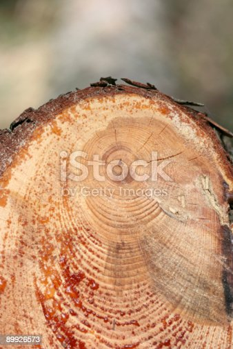 istock Wooden cut 89926573