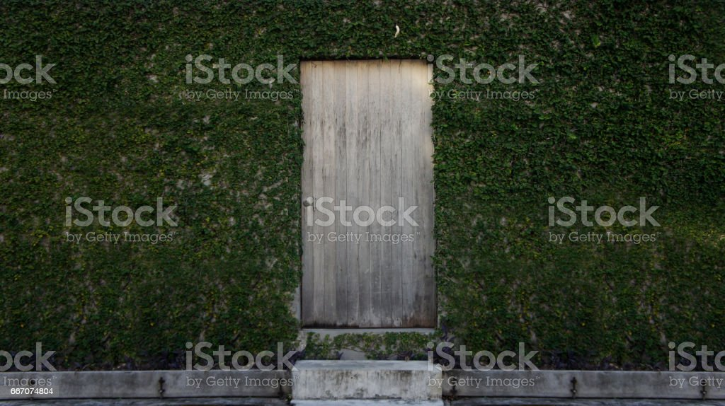Wooden door with green leaves. stock photo