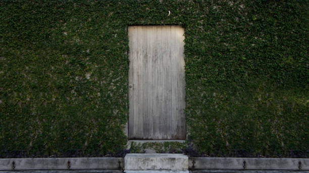 Wooden door with green leaves. stock photo