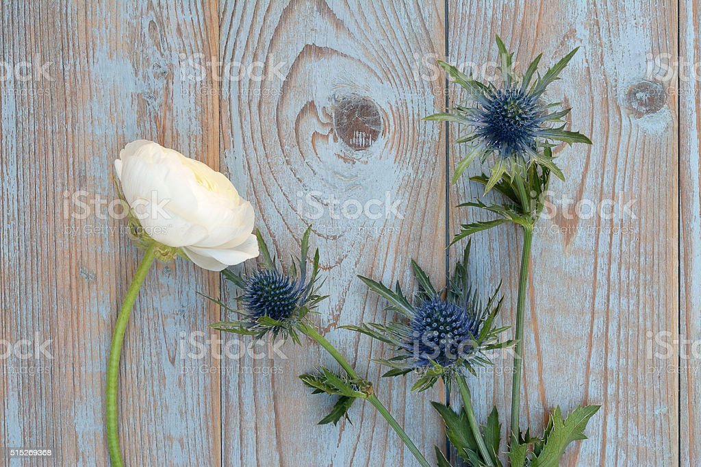 wooden empty copy space  background with blue thistle ,peony decoration stock photo