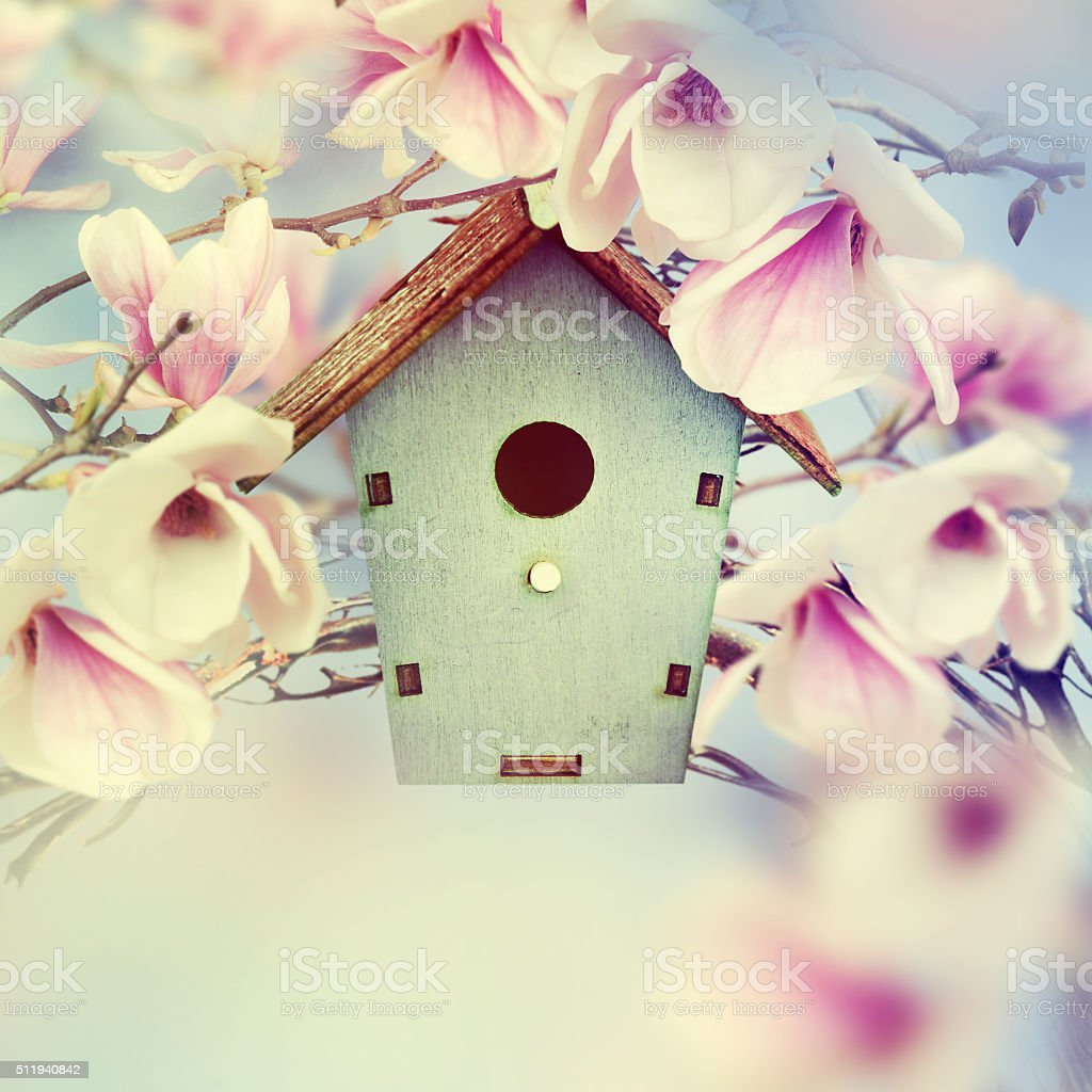 Wooden feeder at the magnolia tree. Spring background. stock photo